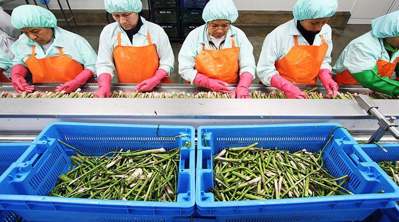 Reconstrucción permitirá alcanzar meta de duplicar agroexportaciones al 2021
