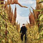 Instalan mesa para promover agroexportación