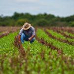 La tecnologia y el manejo del cambio climático en la agricultura peruana