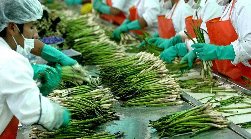 Falta de vuelos comerciales por la pandemia siembra incertidumbre entre los exportadores de espárrago