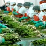 Uno de cada cuatro empleos formales es agrícola en nuestro país