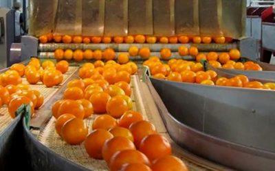 Exportación en US$ FOB de frutas y hortalizas frescas creció 10% durante los cuatro primeros meses del 2020