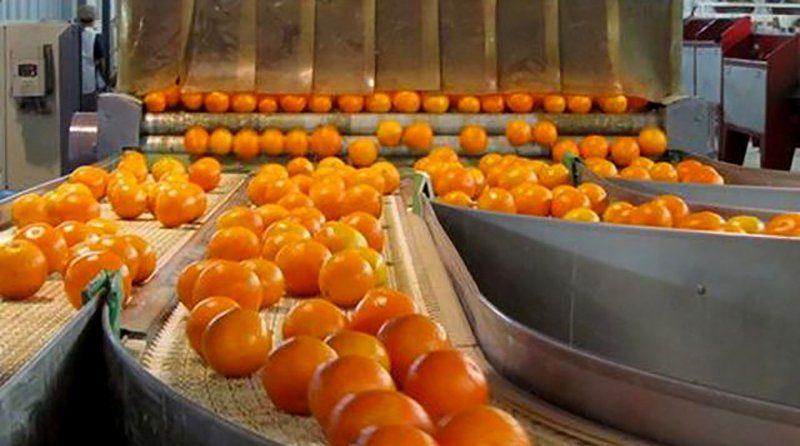 Peruvian fresh mandarin exports grew by 14%