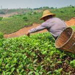 Potenciar la Agricultura de Sierra y Selva