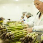 Los consorcios, herramienta eficaz para competir en el mercado agroexportador