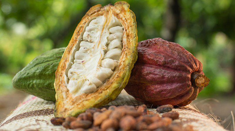 Crecen las exportaciones de cacao