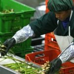 La Ley de Promoción Agraria: La discusión necesaria (Parte II)