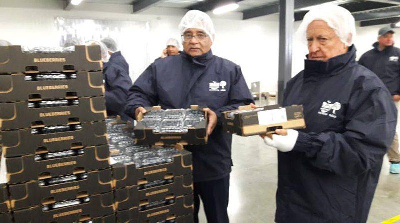 Perú iniciará exportación de arándanos a Malasia