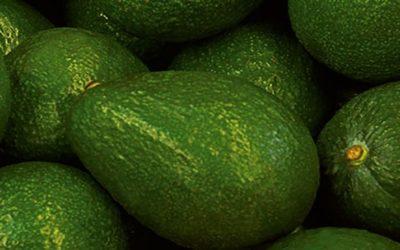 Senasa certificó lugares de producción de palta en Yauyos, Cañete y Huarochirí