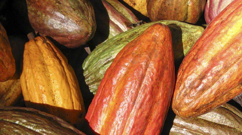 Promperú: exportadores promocionan nuestro cacao en importante feria de Europa