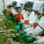 La burocracia y tramitología pueden detener el desarrollo agroexportador