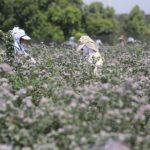 Convirtiendo al agro en un sector estratégico de los países: una mirada a la moderna agricultura peruana