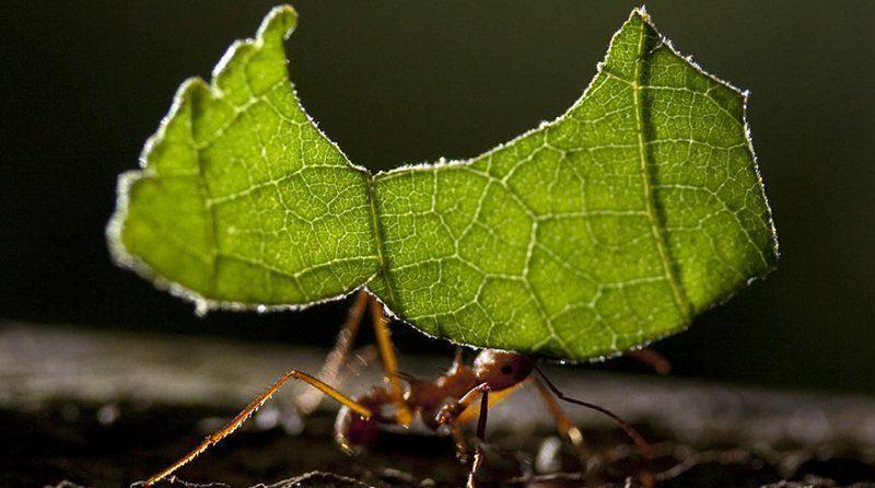 Crean insecticida a base de fruta para contrarrestar plaga agrícola