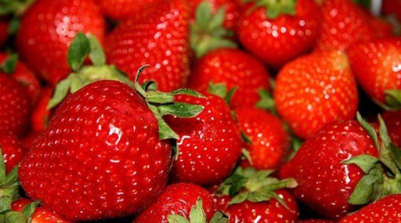 Se incrementa exportación de fresas y suma US$ 14.3 millones entre enero y mayo