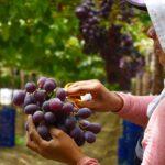 Los retos de la agricultura para el 2020