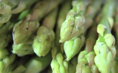 Modernización del Agro