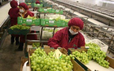 Agroindustria, Construcción, Minería, Pesca y Manufactura operarán con normalidad durante cuarentena