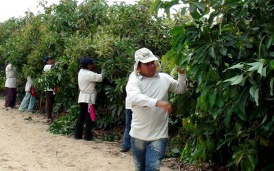 AGAP: Es necesario impulsar al sector agrario para reactivar la economía peruana