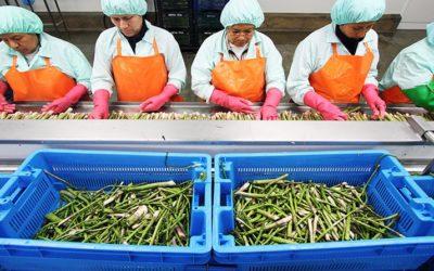 Empresas venden fundos, reducen hectáreas y reconvierten cultivos