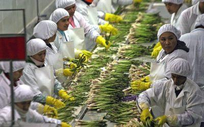 El panorama para la agroindustria en medio de incertidumbre política y la nueva ley agraria