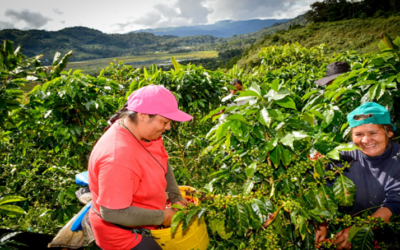 Pequeños agricultores asociados tendrían más beneficios de financiamientos, según expertos