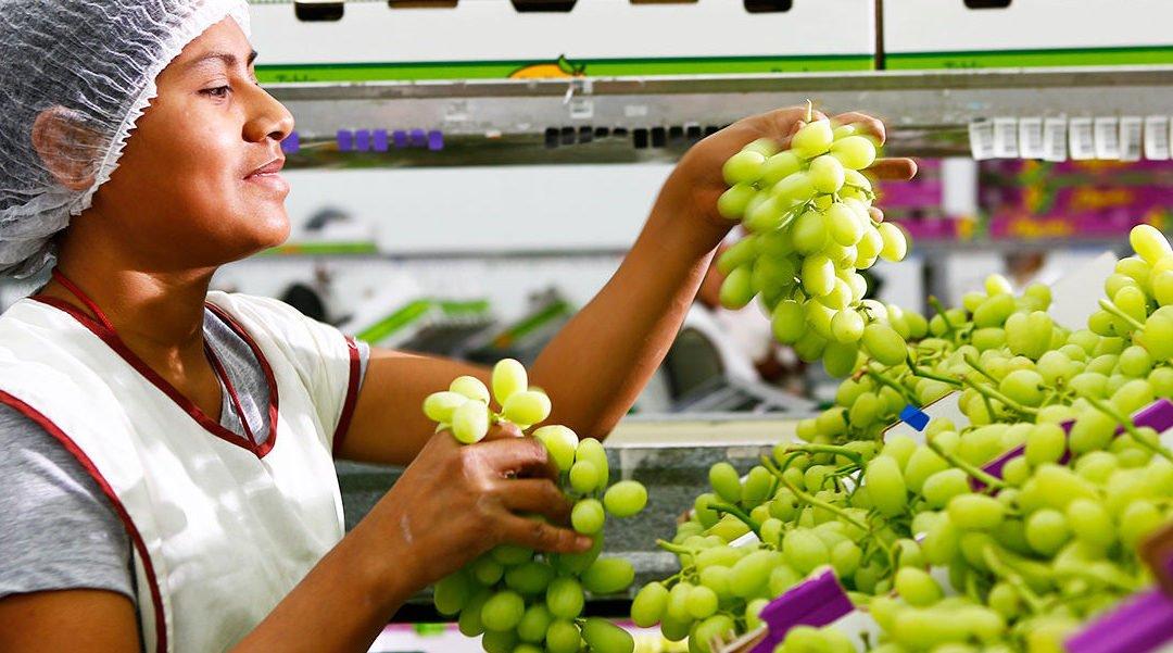 Mincetur: Agroexportaciones peruanas sumaron US$ 7.550 millones en 2020, mostrando un incremento de 6.7%