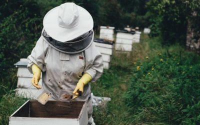 Crecimiento explosivo de la industria de palto y arándano hace que cada año se demande más colmenas para la polinización de cultivos