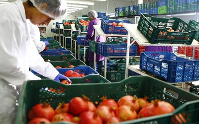 AGAP: Utilidades netas de sector agroexportador solo representan el 9.6% del total de las ventas