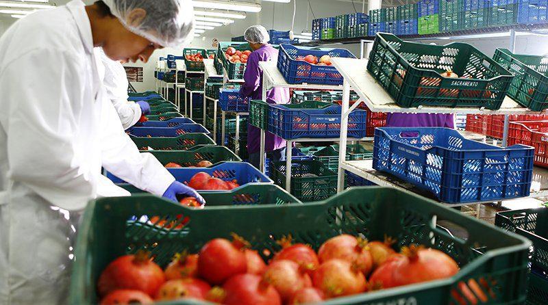 Pese a todo, agroexportación podría crecer este año, pero no la agricultura tradicional