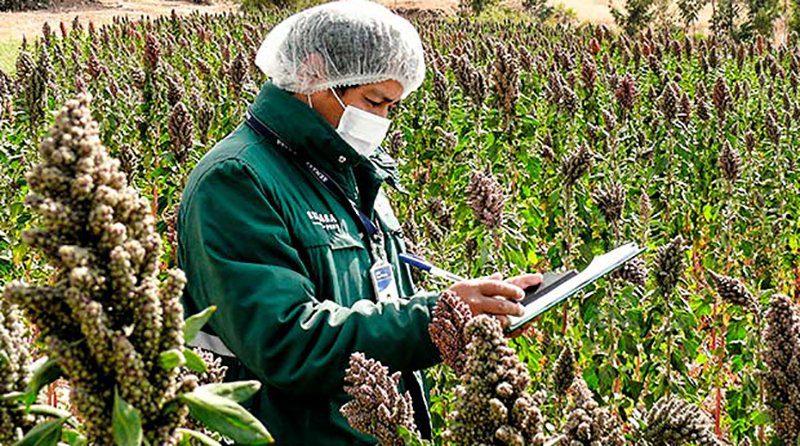 Quinua peruana se podrá exporta al mercado colombiano