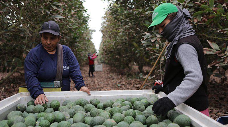 Nueva ley agraria: Pobre agricultura o agricultura pobre