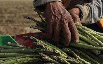 Construyamos un camino de éxito para la agricultura familiar