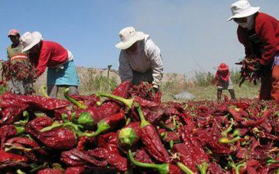 ¿Qué se puede hacer con el agro peruano?