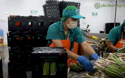 Arriba el Agro – Capítulo 1: Espárragos en Chocopo, La Libertad