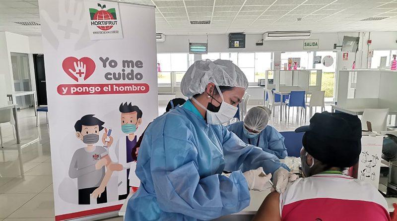 La Libertad: Más de 1,100 trabajadores agroindustriales de Hortifrut fueron inoculados con vacuna COVID-19